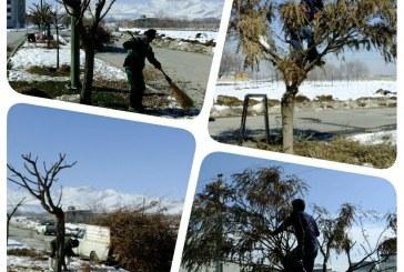 آغاز هرس و بازپیرایی پاییزه درختان در بوستانها، معابر و بلوارها