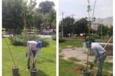 کاشت درخت در بوستان های شهر